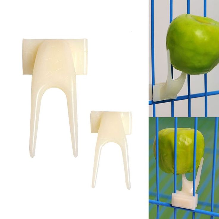 1PC Bird Feeders Plastic Fruit Food Fork Install Cage Accessories Parrot Appliance Pigeon Supplies Feeding M/L S2 http://www.cleavercat.com/product-category/food/wet-food/