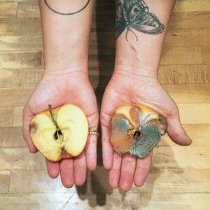 Good Apple / Bad Apple Experiment: Words can make you sick. Or healed. Heavy or light. Here's an experiment that might prove it.