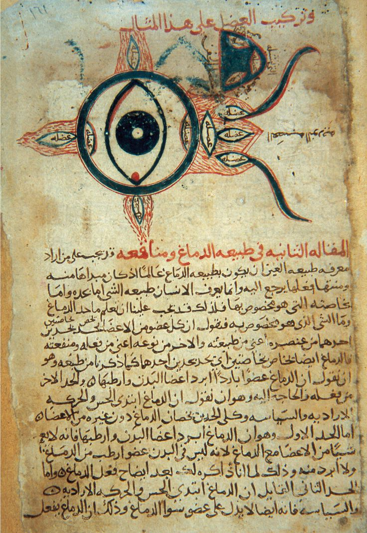 An Arabic manuscript titled Anatomy of the Eye.kept at the ...