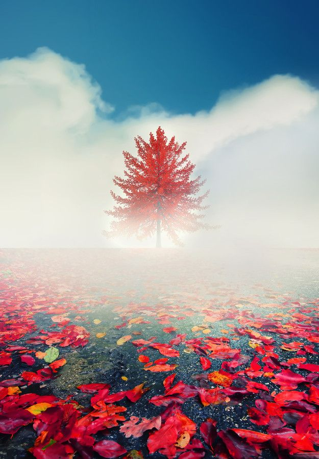 ~~Fog ~ autumn leaves and lone tree in the clouds by eɴιgмα cαsαɴovα▼~~