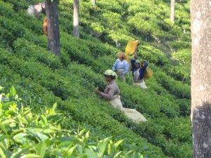 Clipper Fairtrade te