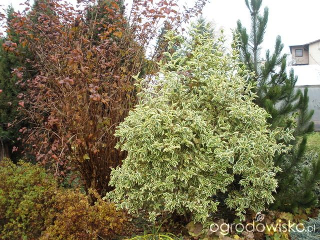 Ogród w remoncie - strona 33 - Forum ogrodnicze - Ogrodowisko