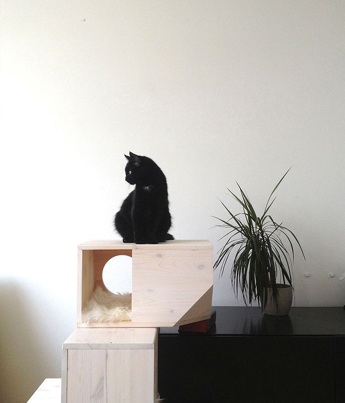 On top of her cat tower