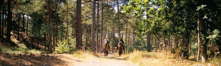 Paardrijden in Schoorlse Duinen