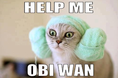 help me! #StarWars #Kitty