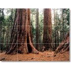 Trees Leaves Picture Back Splash Tile Mural T012 - Traditional - Tile Murals - by Picture-Tiles