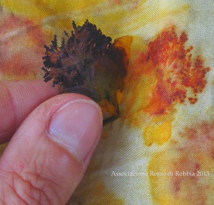 Rosso di Robbia Colori Naturali: eco-print fiori di coreopsis (Coreopsis tinctoria L.) stampati su seta
