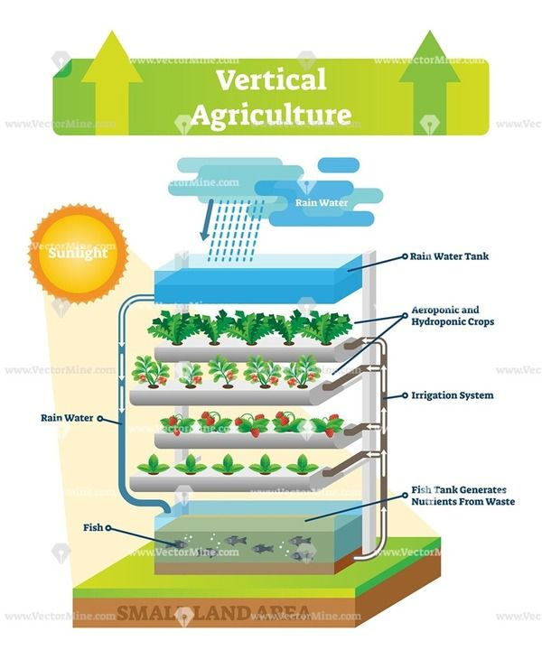 Vertical Agriculture Environment Scheme Vector Illustration Agriculture Hydroponics Agriculture Projects