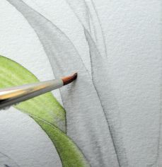 How to paint watercolour botanicals – part one - How To - Artists &…