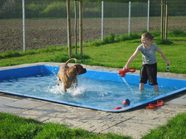 10 best images about dog pools on pinterest dog pools