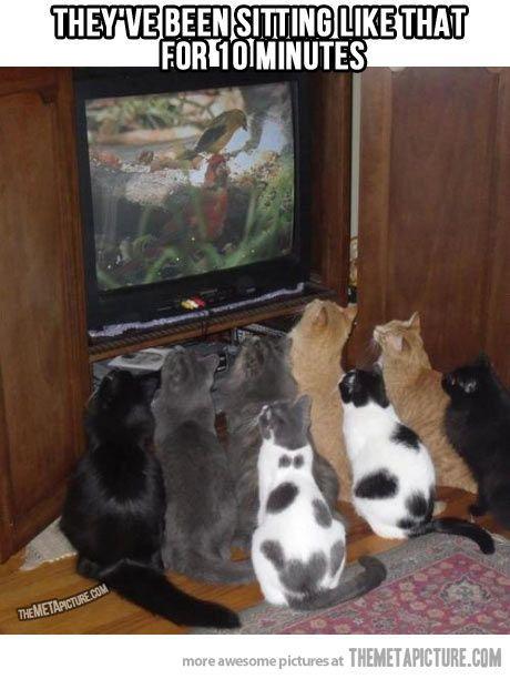 Aww kitties.