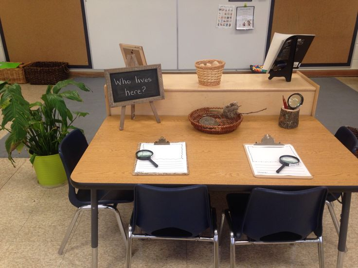 Discovery table with a provocation about where things live.  Displayed is a birds nest and a turtle shell.