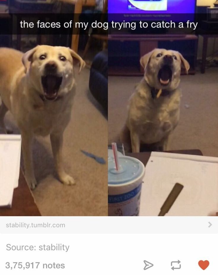 Best Dog Snapchats Ideas On Pinterest Funny Things Laughing - The 29 funniest dog snapchats of all time