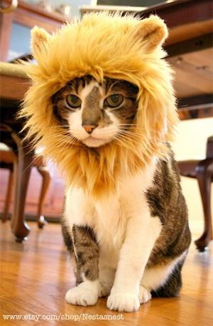 C'è del #disagio. Il mio padrone è un idiota.  #gatto #leone