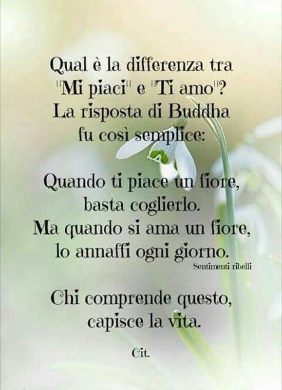 Immagini E Frasi Belle Sulla Vita.Frasi Belle Sulla Vita Per Immagini Whatsapp Statisticafacile It Italian Quotes Words Quotes Inspirational Quotes