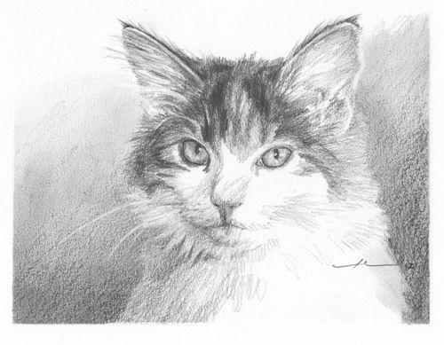 Pensil Potret Menggambar Tips Backgrounds