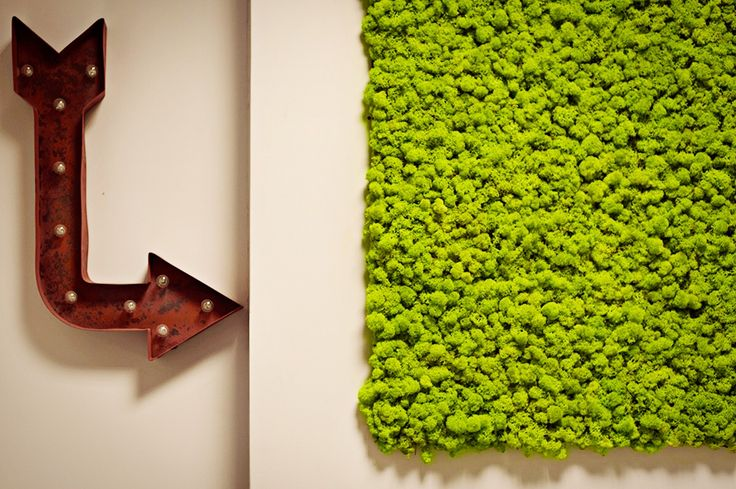 Parete verde in muschio stabilizzato nel nostro show room