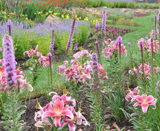 17 Best Images About A Home Garden On Pinterest Gardens Raised Beds And Plants