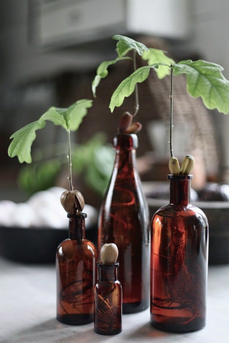 DIY Grow an Oak Tree from Acorn. source: Swedish stylist Marie Delice Karlsson's blog Min Lilla Veranda. via Gardenista