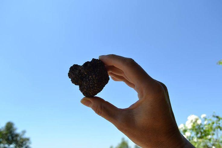 Fresh truffle http://tartufiandfriends.it
