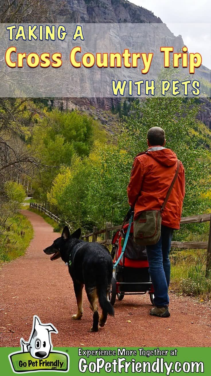 How To Take A Cross Country Road Trip With Pets Cross Country