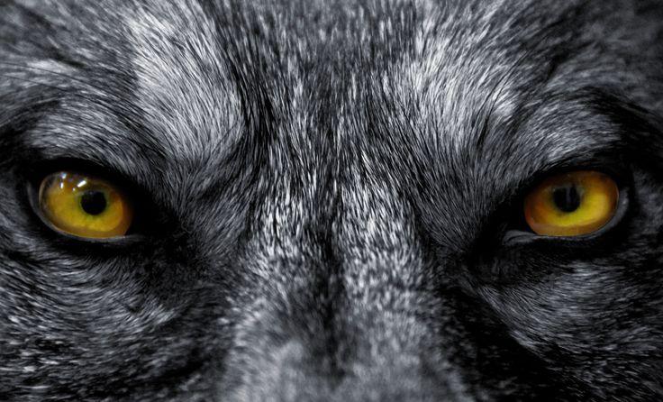 Il mistero del lupo mannaro strega e incanta da sempre il borgo del Piagnaro a Pontremoli in provincia della Lunigiana. I suoi vicoli stretti e il grigiore