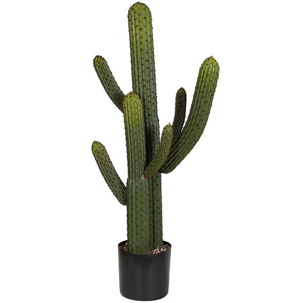 Artificial Whisker Cactus 3'.5 Feet Tall Artificial Senita Cactus ❤ liked on Polyvore featuring filler, leaves and plants