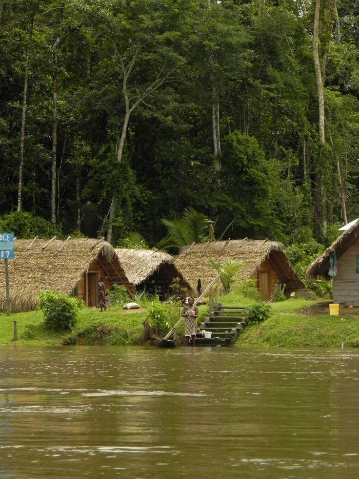 The Jungle - Suriname