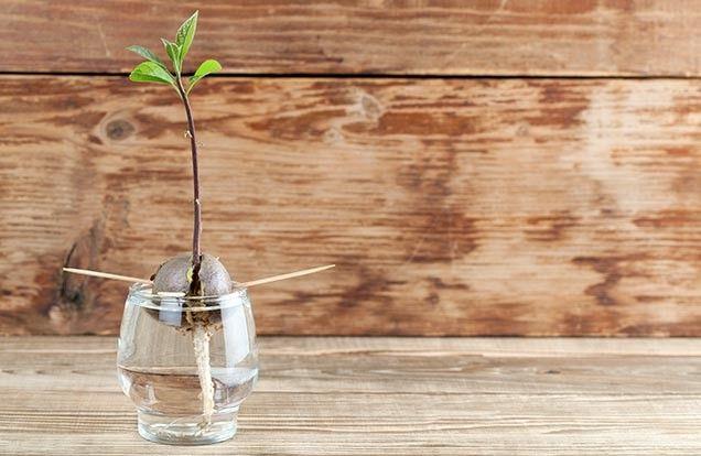 15 groentes en kruiden die je zelf opnieuw kunt laten groeien - news_detail | 24Kitchen