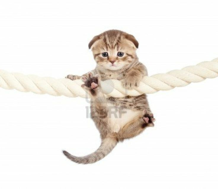 This kitten is hanging in there, waiting for the weekend. So are we!