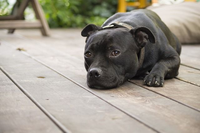 """Nobody likes to hear the """"C"""" word, especially when it comes to our beloved family members – human and canine alike. Our dogs are at risk for as many different types of cancers as people are with all different sorts …"""