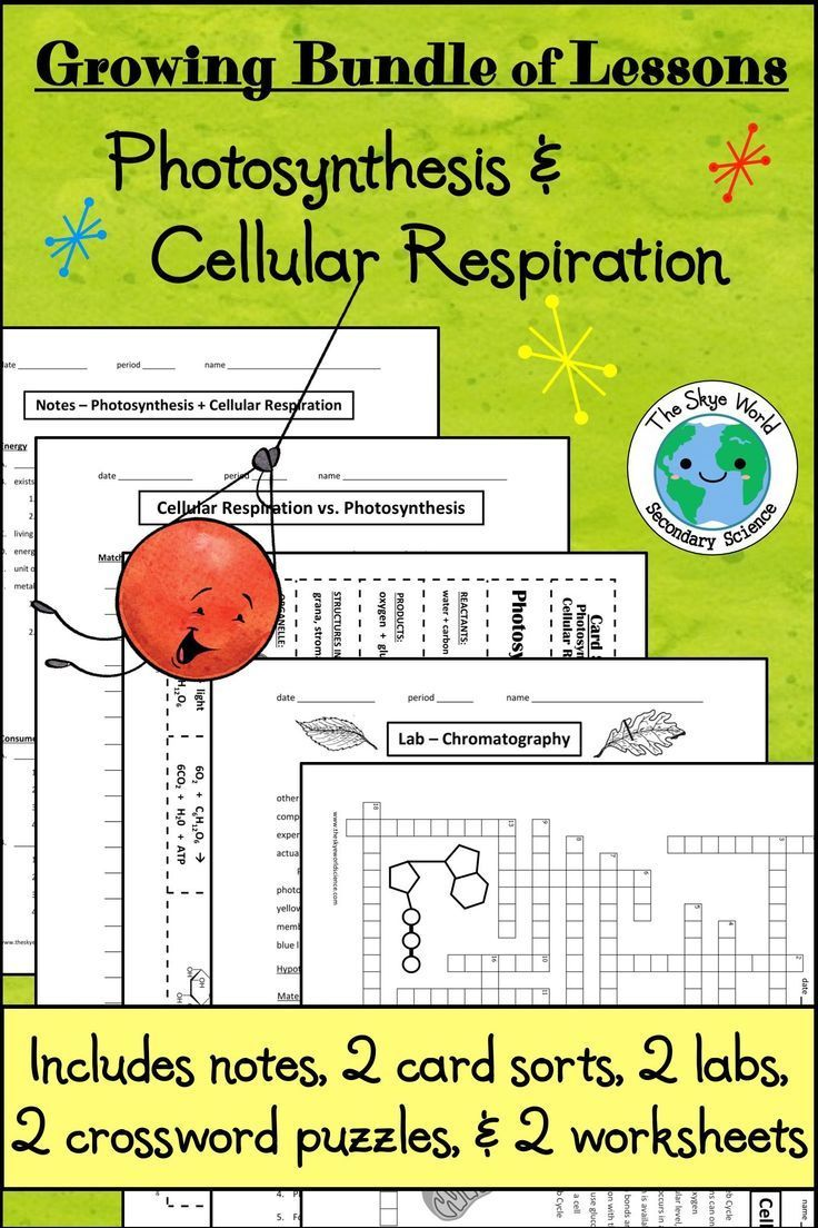 This Bundle Of Lessons Will Prepare Students To Differentiate Between The Proce Photosynthesis And Cellular Respiration Cellular Respiration 10th Grade Science