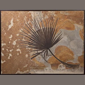 Fossilized palm frond from the Green River Formation, Lincoln County, Wyoming, US