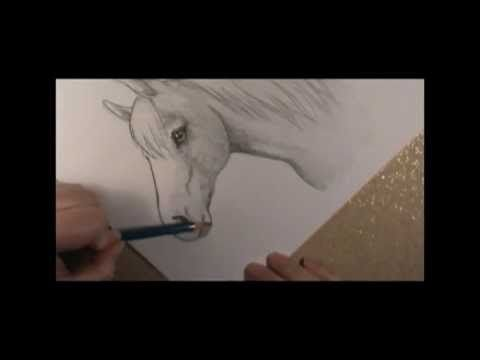 267 best drawings images on pinterest drawings how to draw and how to draw a horse head video tutorial by art ala carte ccuart Choice Image
