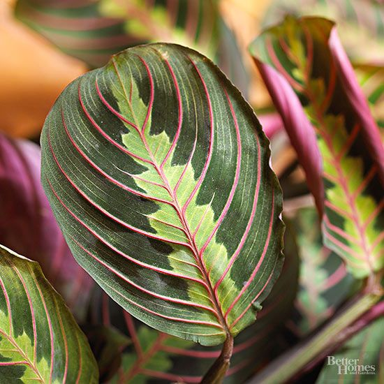 Indoor plants for low light the plant facts and the facts - Green leafy indoor plants ...