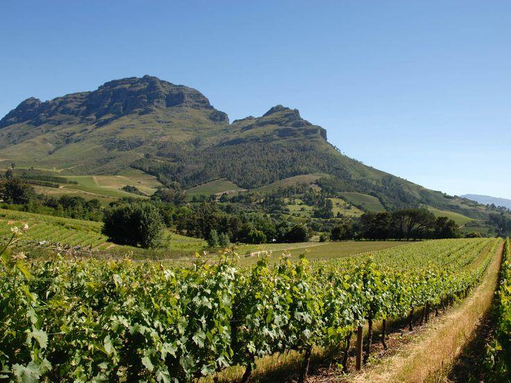 20140421-south-africa-Simonsberg-vineyards-erica-moodie.jpg
