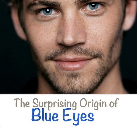 The Surprising Origin of Blue Eyes, A team at University of Copenhagen conducted a study in 2008 about the formation of blue eyes. The research showed that those who have blue eyes have a single common ancestor. They found a genetic mutation that took place between 6000 – 10,000 years ago which is the reason behind the occurrence of blue eyes and the causation of all blue eyed people today.