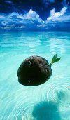 Fiji budget hotels   Fiji backpacker hostels   Discount Fiji accommodation   Fiji For Less