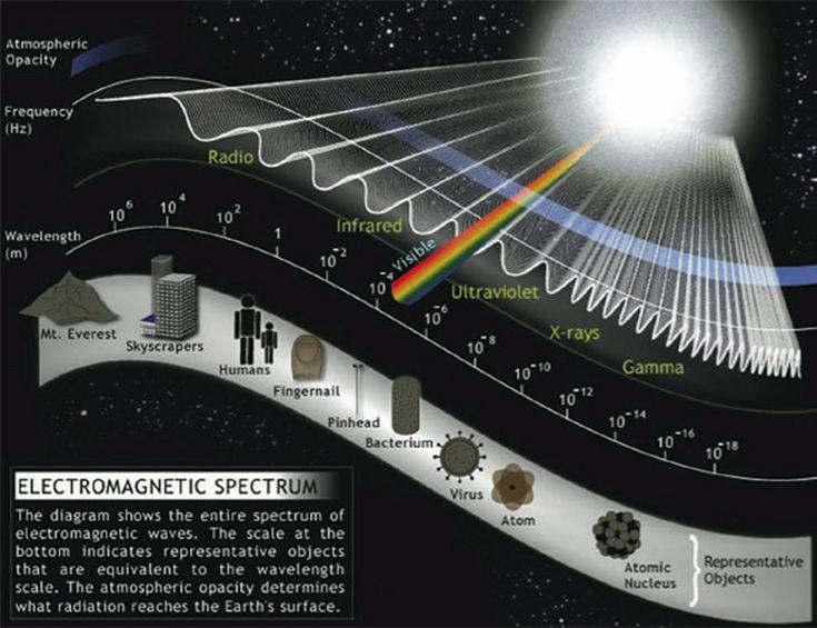 Αποτέλεσμα εικόνας για biology electromagnetism