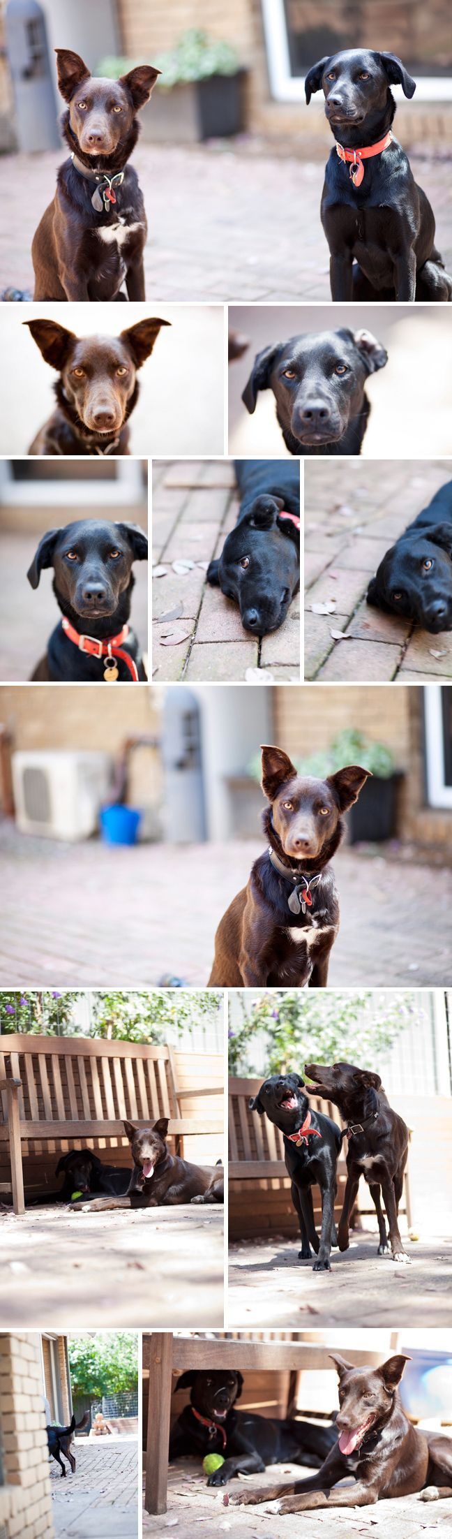 The Pups by BriannaKate Photography