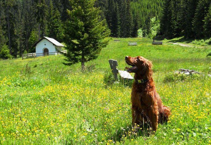 mind. 5 geführte Wanderungen mit Hund im Hotel Riederhof in Tirol  Geführte Wanderungen, Hundespielwiese mit Schwimmteich, Gassiservice, mobile Hundeschule uvm. im Wellness- & Wanderhotel Riederhof im Tiroler Oberland. Bis zu 3 Hunde erlaubt - weitere Fellnasen gerne auf Anfrage!   #wandern #wandernmithund #urlaubmithund #hundeurlaub #hundefreundlich #hotelmithund #riederhof #tirol #tiroleroberland #hotelriederhof #wellnessmithund #wellnesshotel #wanderhotel #hunde #hund #dogswelcome…