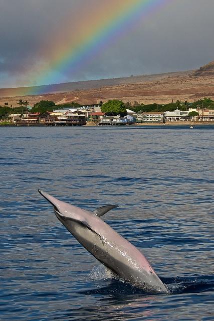Dolphin and Rainbow