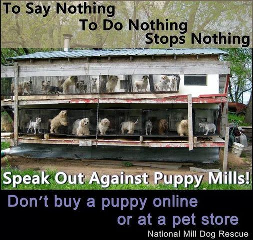 "This is how your ""reputable breeder"" BREEDS DOGS. There is no such thing as a reputable breeder. Anyone that profits from breeding dogs, while thousands die in shelters, is pathetic. Adopt, don't shop."
