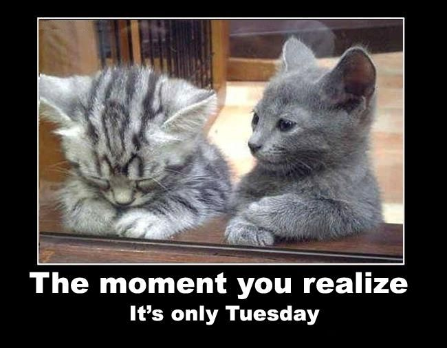 Its only Tuesday quotes quote cats days of the week cute kittens tuesday tuesday quotes funny animals