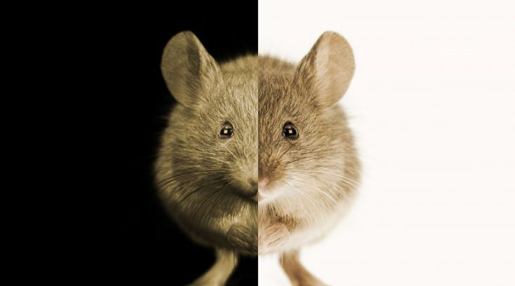 Mejores 20 imágenes de Animals in research en Pinterest | Hechos ...