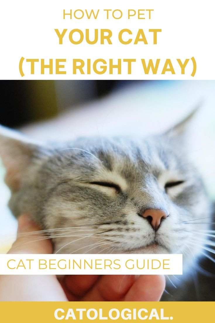 How To Pet Your Cat Properly In 2020 Cats Kitten Care Cat Care