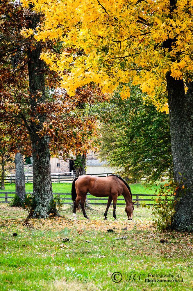 Fall colors on horse farm, Fauquier County, Virginia
