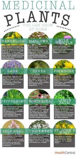 nice Medicinal Plants You Can Grow at Home #gardening #herbs #dan330 livedan330.com/....