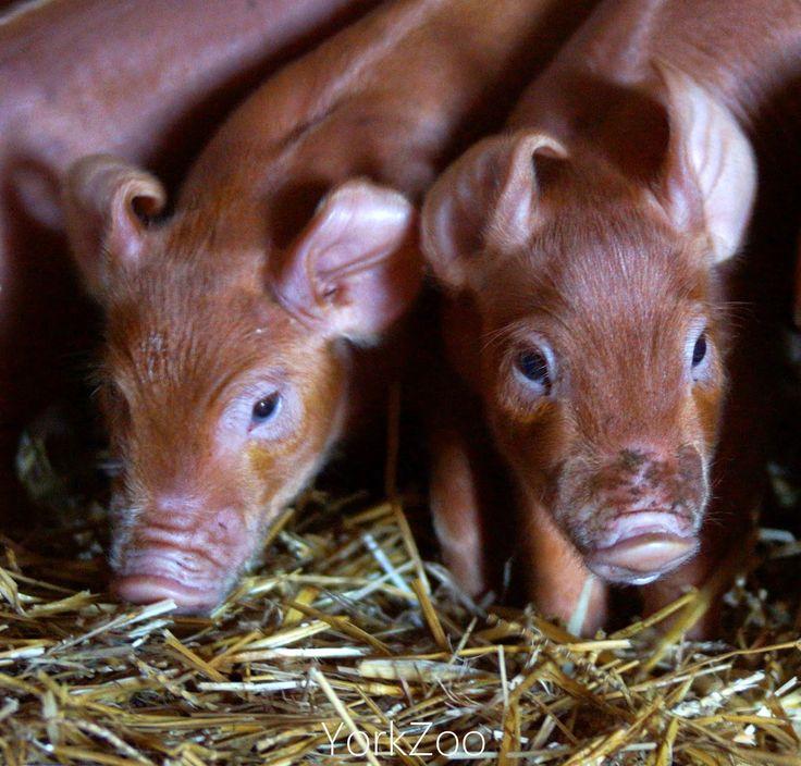how to help farm animals