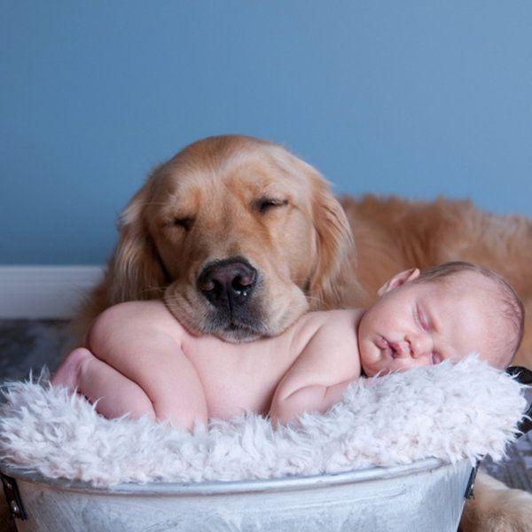 perro y bebé pautas de convivencia